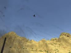 Toucan Shooter